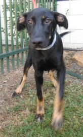 Chester S A 5 Month Old Hound Mix Looking For Love Meet Him At