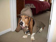 Funny Basset Hound dressed like Sherlock Holmes Silly Dogs, Big Dogs, Large Dogs, Basset Hound Funny, Hound Dog, Dog Halloween Costumes, Dog Costumes, Halloween Ideas, Bassett Hound