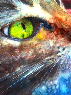 Cat's eye, by Alex Carter.  Amazing colors