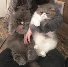 FLUFF Team :D Want more cute kittens? Click the photo for more! Animals And Pets, Baby Animals, Funny Animals, Funny Cats, Cute Animals, Pretty Cats, Beautiful Cats, Crazy Cats, I Love Cats