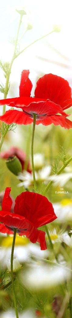 Springtime ❤️