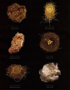 """""""Small Miracles"""" by Sharon Beals for Audubon Magazine March-April 2008 #nido #nest - Carefully selected by GORGONIA www.gorgonia.it"""