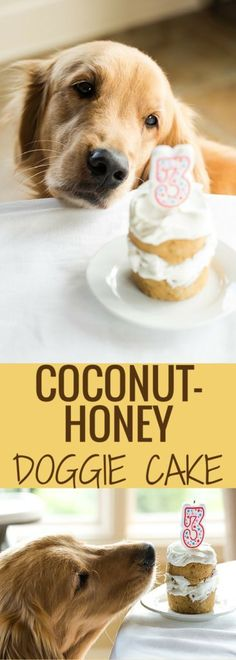 An easy coconut-honey doggy cake made with only a handful of ingredients and perfect for celebrating your pup's birthday! // KaufmannsPuppyTraining.com // Kaufmann's Puppy Training // dog training // dog love // puppy love //