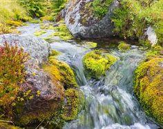 Lapin puro - tunturipuro syksy vesi sammal kivi saniainen virtaus vihreä ruska Pallas-Yllästunturin kansallispuisto kivet