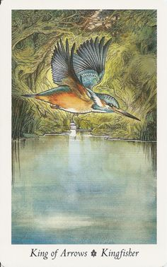Inner Whispers: May Queen Reading King of Arrows Kingfisher The Wildwood Tarot Wildwood Tarot, Divine Tarot, King Of Swords, All Tarot Cards, Writing Fantasy, Tarot Card Decks, Oracle Cards, Green Man, Kingfisher