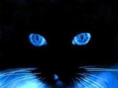 letra de la cancion el gato triste y azul: