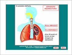Verifiche matematica scuola primaria: Segnalo: l'apparato respiratorio