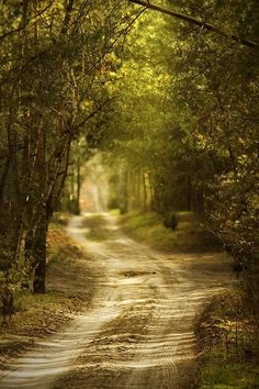 This reminds me of the old country road at my Granny' house in Mississippi. Mama, my sisters, my baby brother and I would walk down a road like this when we were little in the cool of the evenings before it got dark. :) Precious memories...