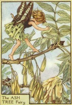 CICELY MARY BARKER | cicely mary barker / the ash tree fairy