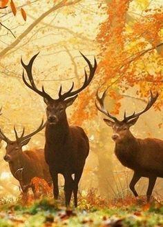 Stunning Creatures