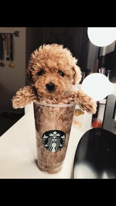 72 Funny Fuzzy Animals To Brighten Your Day - Doggo❣ - Perros Graciosos Cute Little Animals, Cute Funny Animals, Funny Dogs, Cute Dogs And Puppies, Doggies, Cute Puppy Pics, Adorable Puppies, Puppies Puppies, Kittens And Puppies