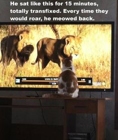 I would be concerned that the lions are passing on tips or ideas. The cat is plotting to kill you in your sleep!