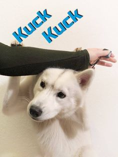 ☛ Kuck-Kuck ☛ Waving ☛ Hugging ✓ Easy to learn ✓ Sweetly sweet ✓ Tricks for your dog ✓ Instructions for beginners ✓ Tricks for dogs English Springer Spaniel, Pet Dogs, Dogs And Puppies, Pets, Corgi Puppies, Weiner Dogs, Yorky, Dog Grooming Business, Black Lab Puppies
