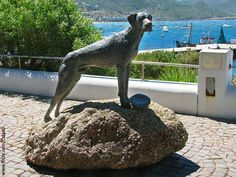 Simon's Town very own Able Seaman Just Nuisance is the first and only canine Royal Navy member in history. Here is the legendary tale behind the noble creature. From his birth date to a few fun facts about the great dane, we have all you need to know… Serengeti National Park, Great Dane Puppy, Tourist Sites, Cape Town South Africa, Most Beautiful Cities, History Museum, Africa Travel, National Parks, Places To Visit