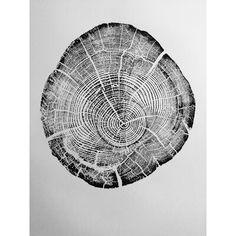 'Driftwood Tree Ring Print from Flathead Lake Montana' Graphic Art