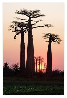 Baobab by Sylvain Sester on 500px