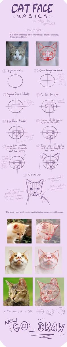 Cat-faces by TigerMoonCat