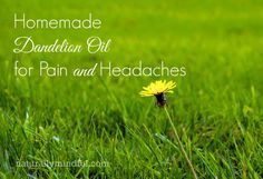 Homemade Dandelion Oil for Pain and Headaches
