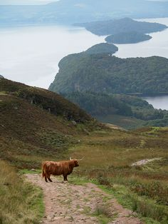 confinedlight:Conic Hill, above Loch Lomond, Balmaha, Scotland