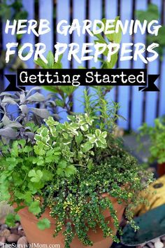 Herb Gardening for Preppers: How to Get Started