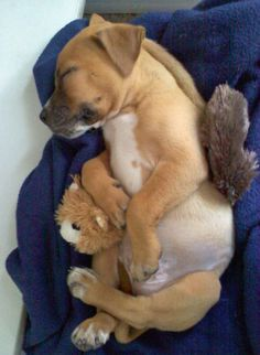 Possibly the most adorable Daily #puppy picture I've ever seen. SO cute. #pet #dog