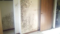 Mold testing New Castle, IN. SnLco offers professional mold testing and removal services for New Castle, Indiana and surrounding areas.    http://snlco.com/services/mold-remediation/