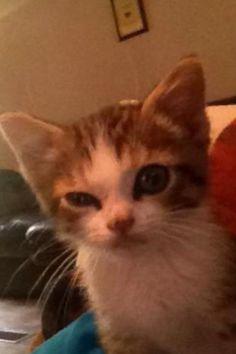 My cat when we first found him 7months ago! Meet Mittens!