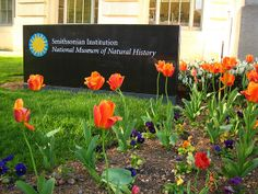 In warmer months, come enjoy the beautiful flowers planted on our grounds by @Smithsonian Gardens.