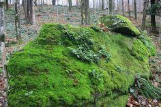 Moss Acres: #4