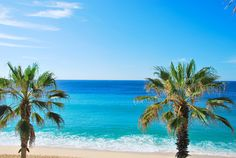 Beautiful palm trees lining Medano Beach in Cabo San Lucas, Mexico.