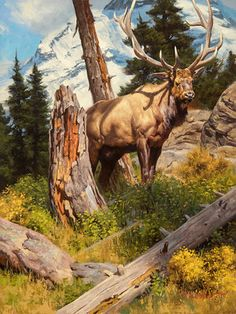 Current Work — The Art of Dustin Van Wechel Wildlife Paintings, Wildlife Art, Animal Paintings, Moose Pictures, Nature Pictures, Deer Art, Watercolor Landscape, Abstract Landscape, Nature Animals