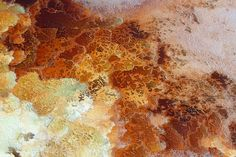 Amazing salt formation photos from the Dead Sea via BoingBoing
