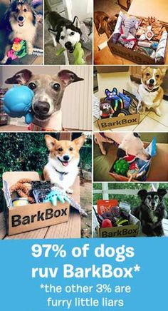 BarkBox delivers a box of paw-picked toys & all-natural treats every month, so you can spend more time on important things (like belly scratches and fetch).