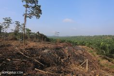 Forest conversion for an oil palm plantation in Sumatra, Indonesia