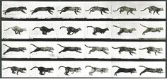 Animal - Locomotion - Photo - Cat - Running - Stop motion