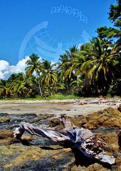 Paisaje de playa y rocas con un tronco seco en primer plano. Playa Garza, Costa RIca.