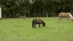 Enough Of Your Frolicking (gif)