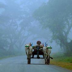 Rural India.                                                                                                                                                                                 Mais