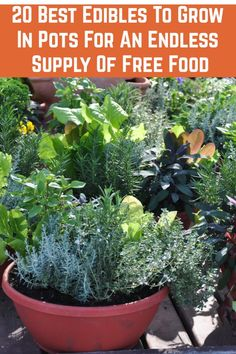 What is the best way to choose a planter for your container garden? Which pots are best for growing vegetables? Learn what to look for and how to select the best containers for your vegetable garden. Vegetable Garden Planters, Garden Pots, Planter Garden, Garden Ideas, Veggie Gardens, Vegetable Garden For Beginners, Gardening For Beginners, Gardening Tips, Gardening Services