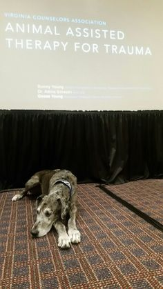 Dr. Adina Silvestri (@LifeCyclesC) | Twitter Presenting with our therapy dog, Goose! Goose is modeling self-care:)