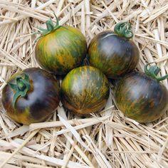 Blue Tomato Blue Green Zebra ブルートマト・ブルー・グリーン・ゼブラ