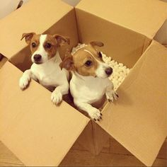 """Your Afternoon """"Aww"""": See A Photo of Candice Swanepoel's Jack Russells 