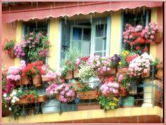 Fleurs image 2