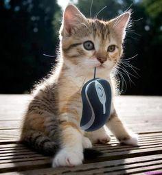 猫 「ほれ、下僕のためにネズミ獲って来てやったゾ!遠慮なく食えにゃ!」的な画像集(笑