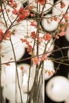 Plum blossoms defy winter as the first flower to bloom. Symbolizing hope and courage, these branches are a striking addition to the Grand Hyatt San Francisco's Chinese New Year celebration.