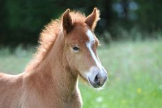 There's nothing more adorable than a foal! Unfortunately, some find themselves orphaned for a variety of reasons. Their mother may have died or simply rejected them. There's also a darker industry that results in nurse mare foals. If you're an experienced horse handler, then consider opening your farm to one of these cuties! Free Horses, Baby Horses, Super Cute Animals, Cute Baby Animals, All The Pretty Horses, Beautiful Horses, Husky Pet, Horse Ranch, Young Animal
