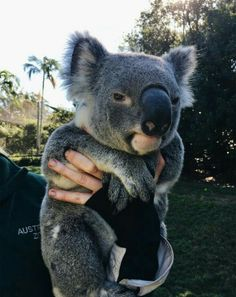Shared by ⚜. Find images and videos about cute, adorable and animal on We Heart It - the app to get lost in what you love. how cute are the koala bears Animals And Pets, Funny Animals, Wild Animals, What Kind Of Dog, Cute Little Animals, Cute Creatures, Animals Beautiful, Majestic Animals, Beautiful Creatures
