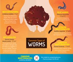 Vermicomposting - Common Types of Worms for Vermicomposting