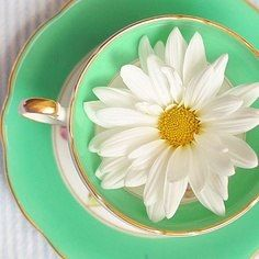Items similar to Mint Tea Photograph, Fresh Spring Daisy in Green Tea Cup, Teacup Photo, Shabby Chic Home Decor on Etsy Happy Flowers, Beautiful Flowers, Fresh Flowers, Simply Beautiful, White Flowers, Green Tea Cups, Daisy Love, Daisy Daisy, Daisy Girl