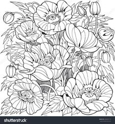 Poppy flowers. Coloring page for adult and older children